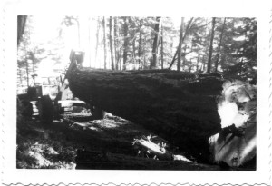 Bulldozer pulling a fir log.ca. 1950